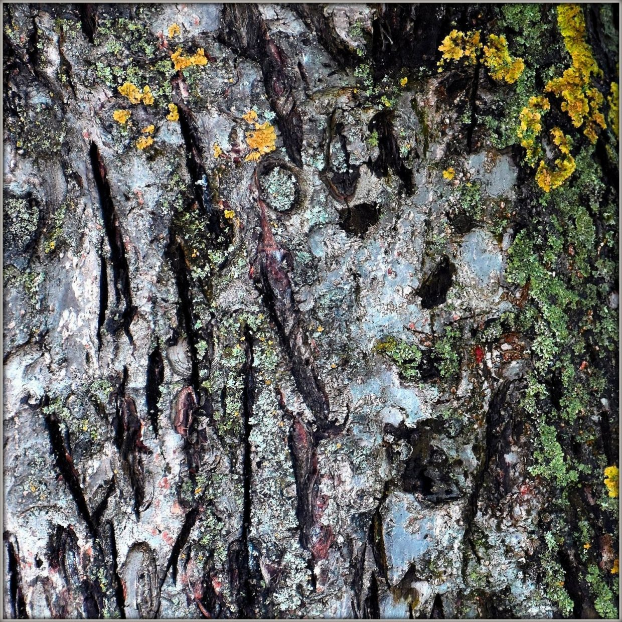 tree bark, abstract, face, quote, ecology, nature
