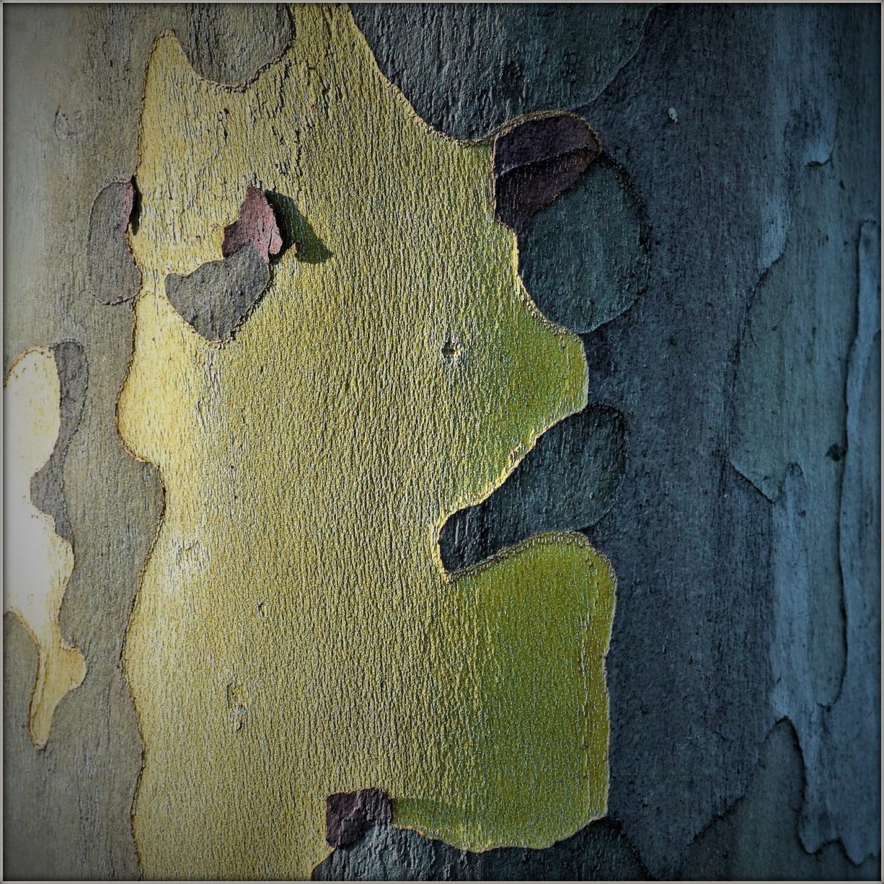 woman face with a beary tree bark