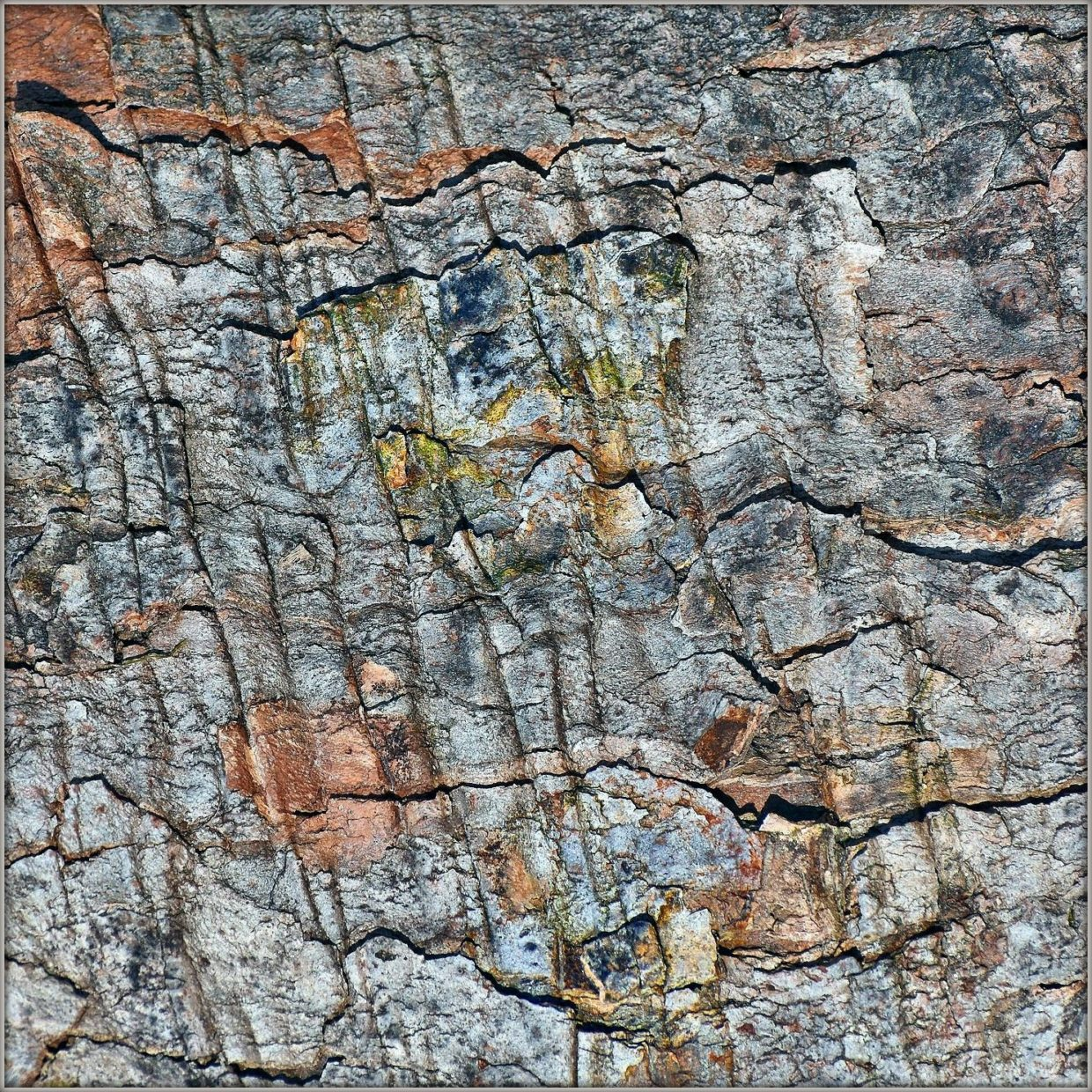 tree bark abstract faces colors