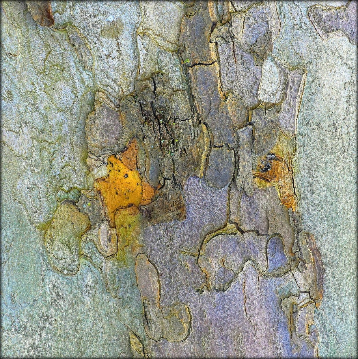abstract nature tree bark pickles from pluto