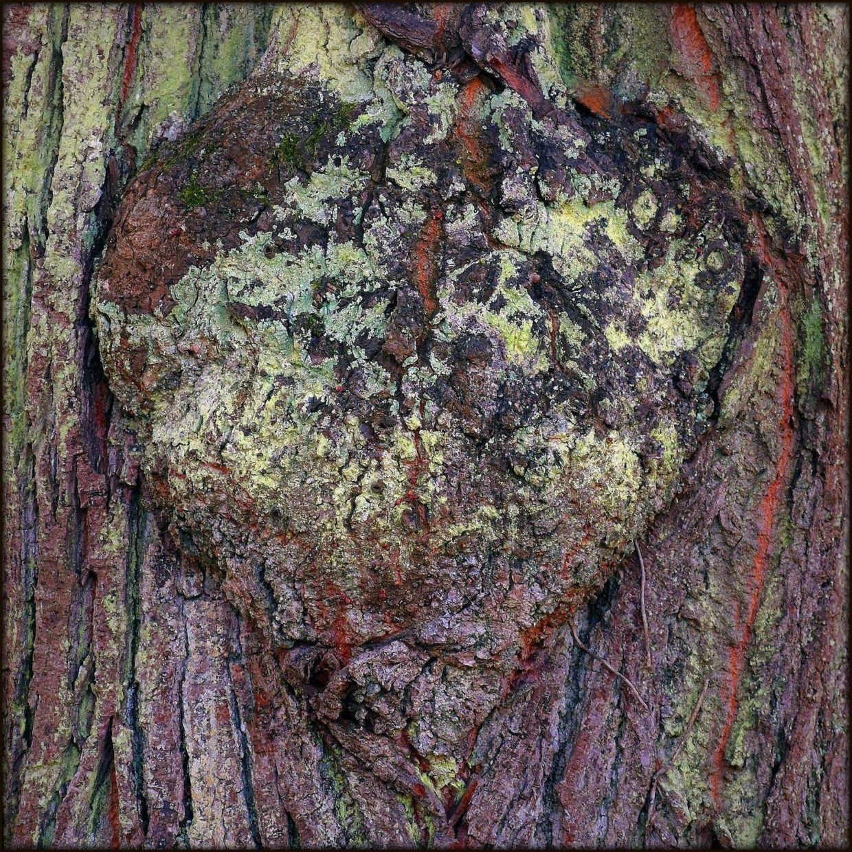 tree bark with colors and a heart