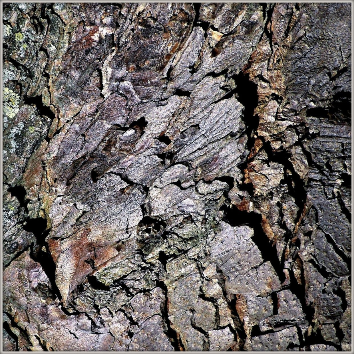 texture bark tree abstract photography