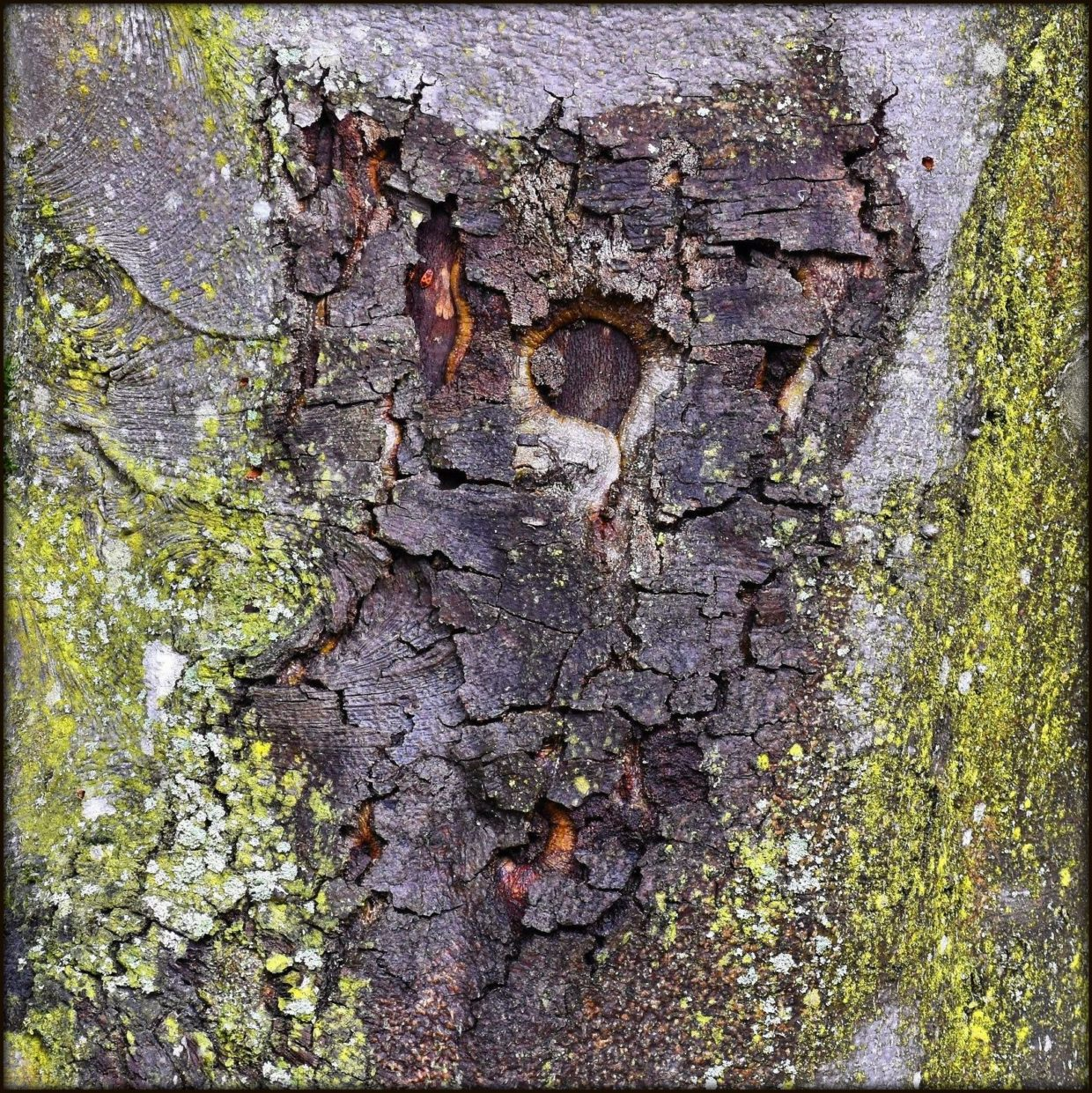 bark tree owl pareidolia abstract climate change project