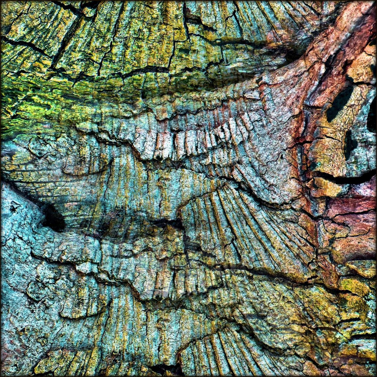 Tree bark with rainbowcolor graffiti